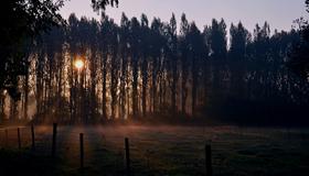 Foggy Morning - 2012